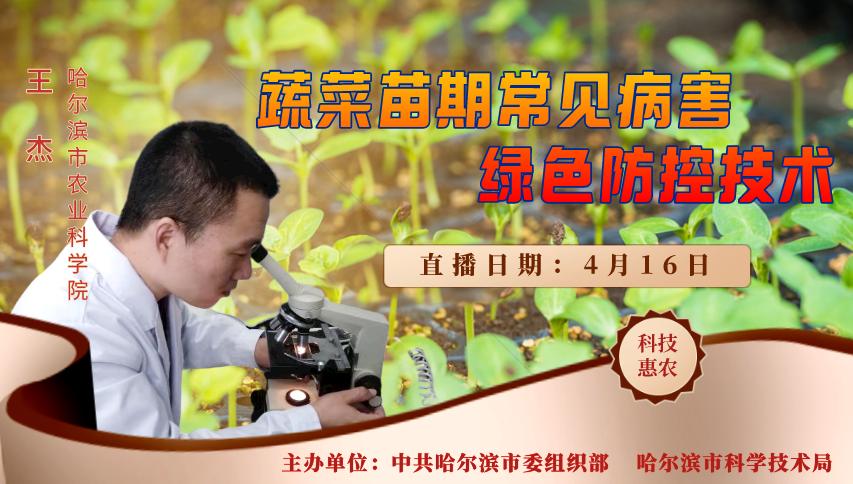 【视频回顾】【科技惠农大讲堂】蔬菜苗期常见病害绿色防控技术
